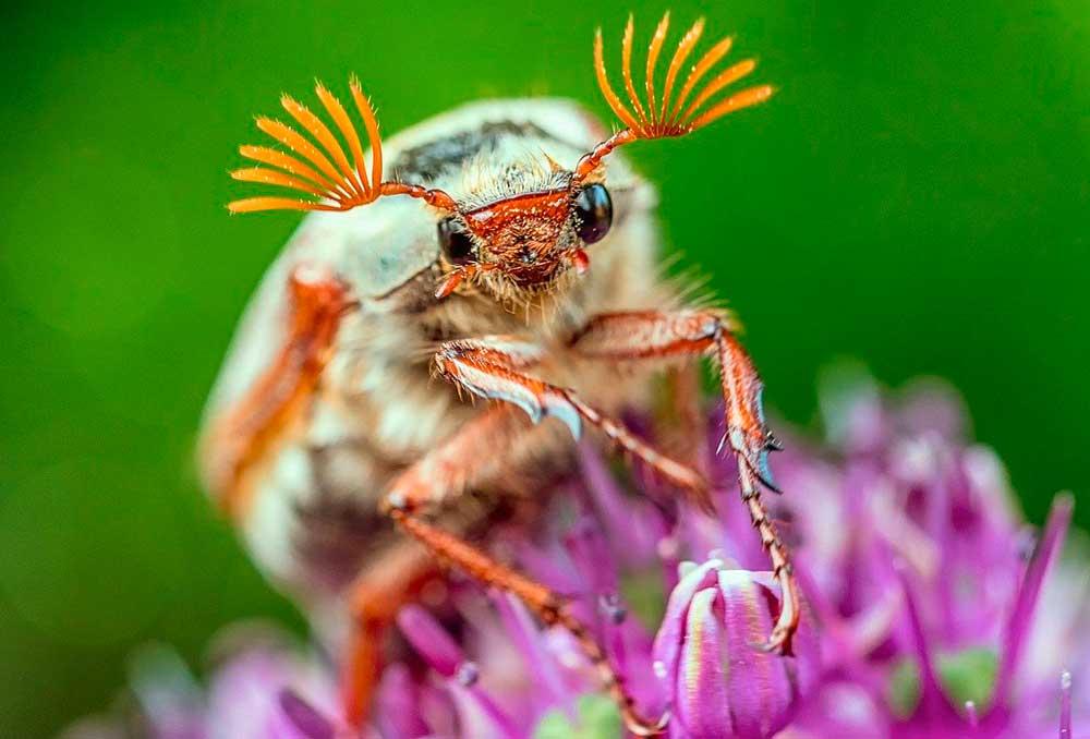 Chapitalk: Eine Welt ohne Insekten?